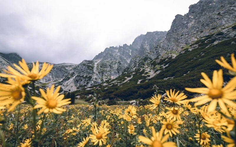 Jaka jest najwyższa góra w Polsce