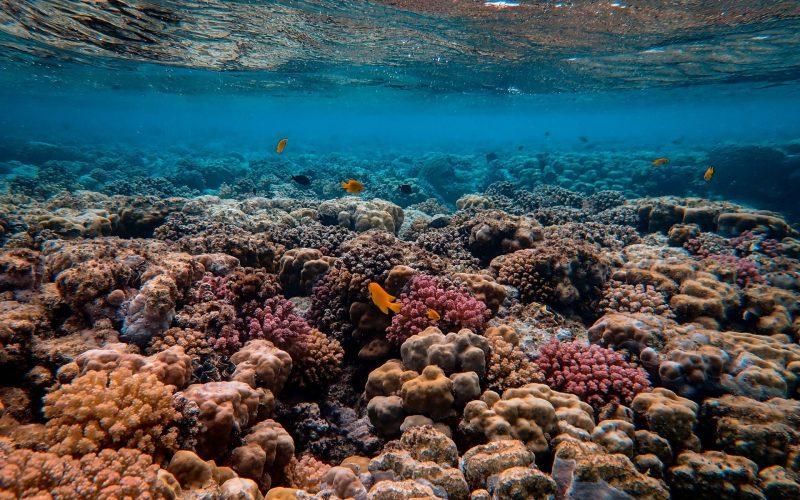 Gdzie znajduje się Wielka Rafa Koralowa?