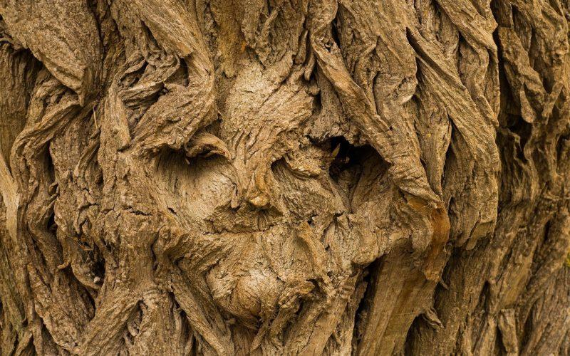 Najstarsze drzewa świata