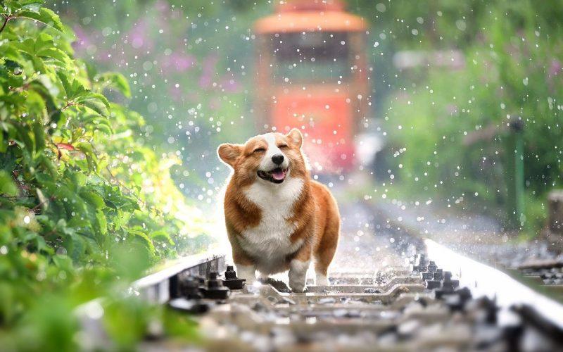Jak przeliczyć psie lata na lata ludzkie?